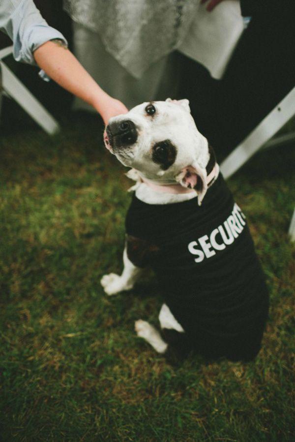 cachorro-no-casamento (9)