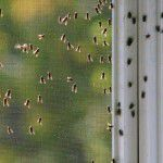Dicas para livrar sua casa de insetos