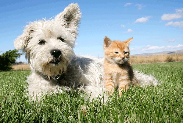 pet-sitting2