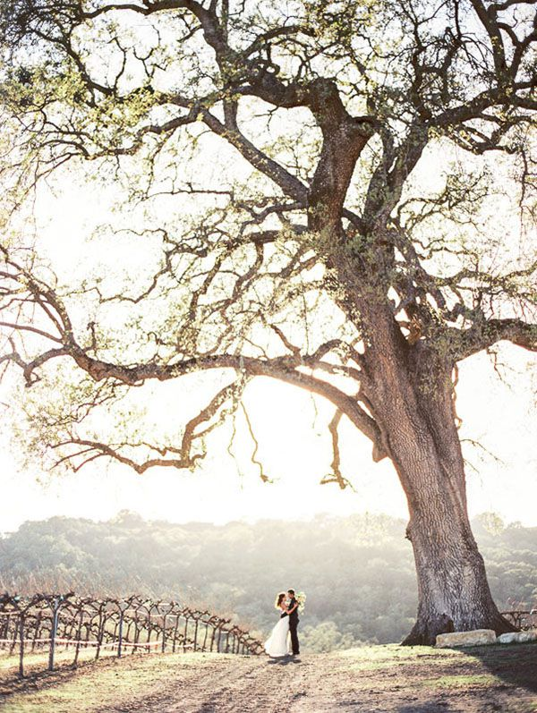 18-rustic-sophistication-wedding-shoot-wine-country