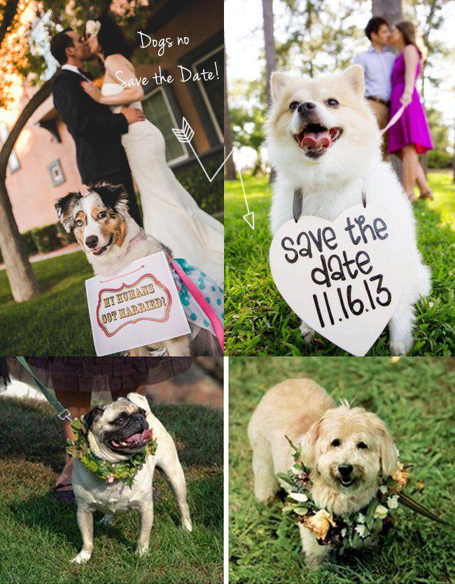 cachorro-em-casamento-2