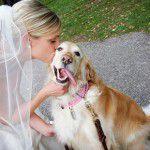Quero um convidado que tenha 4 patas | Pet no Casamento