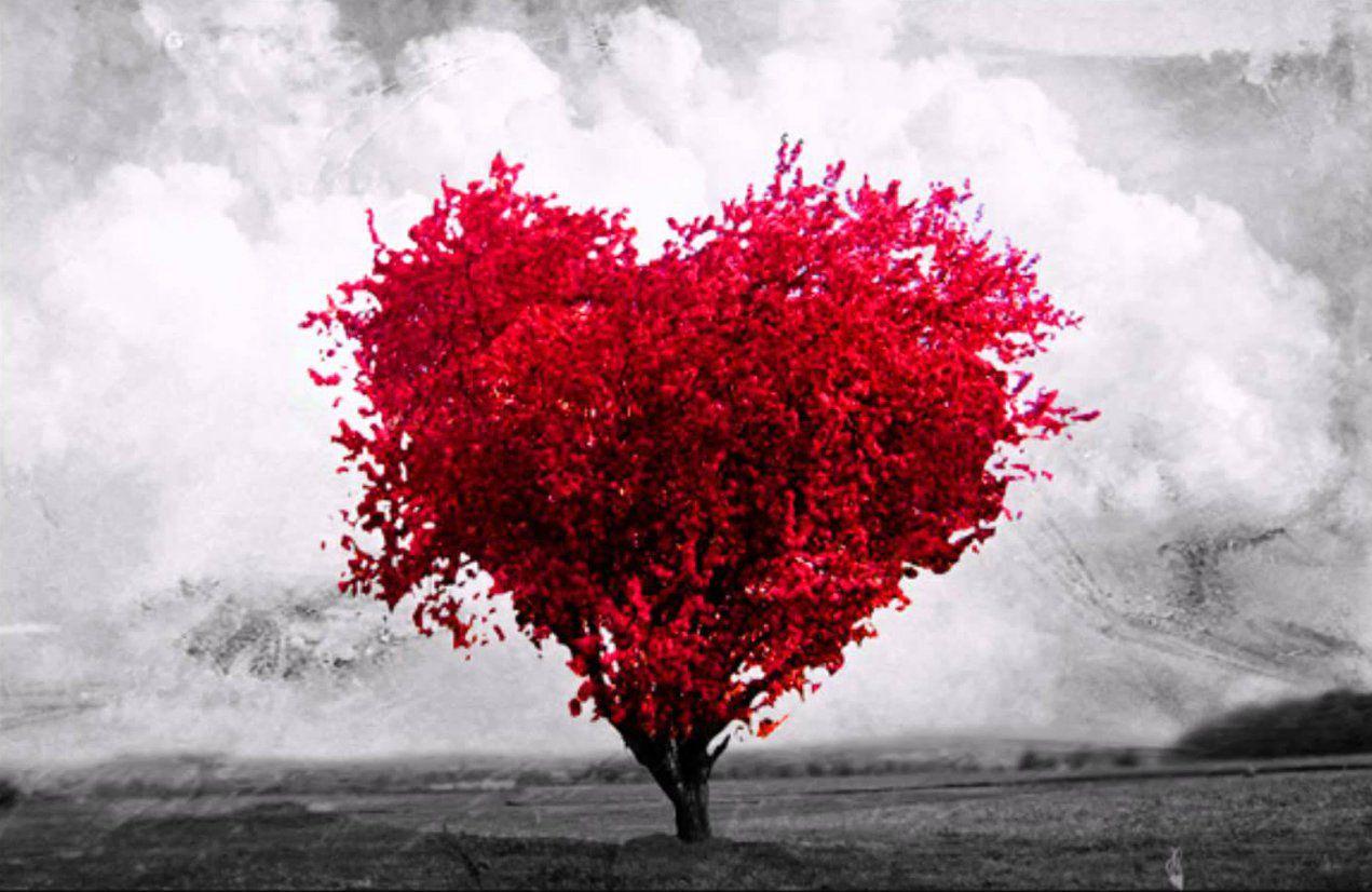 arvoré de amor