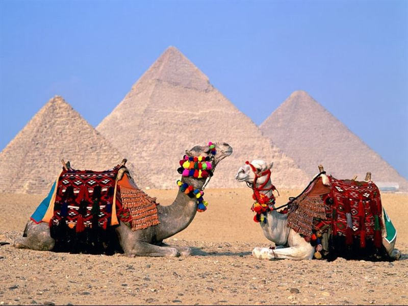 egypt_cairo_camels_wallpaper-normal[1]