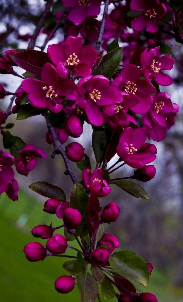 27500a65d729e56d8747455a58ab9536-621x1024 Significado das flores para buquê