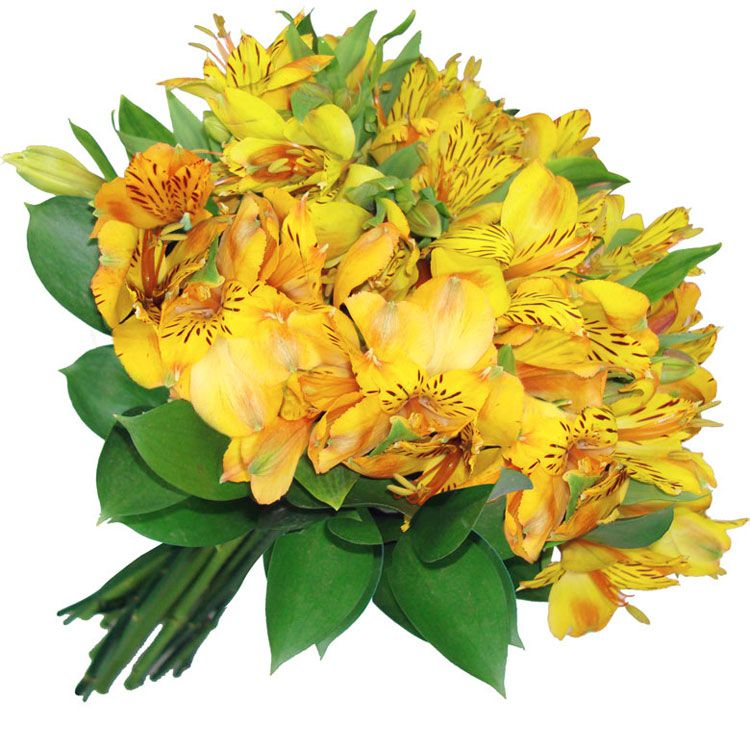 6256gg Significado das flores para buquê