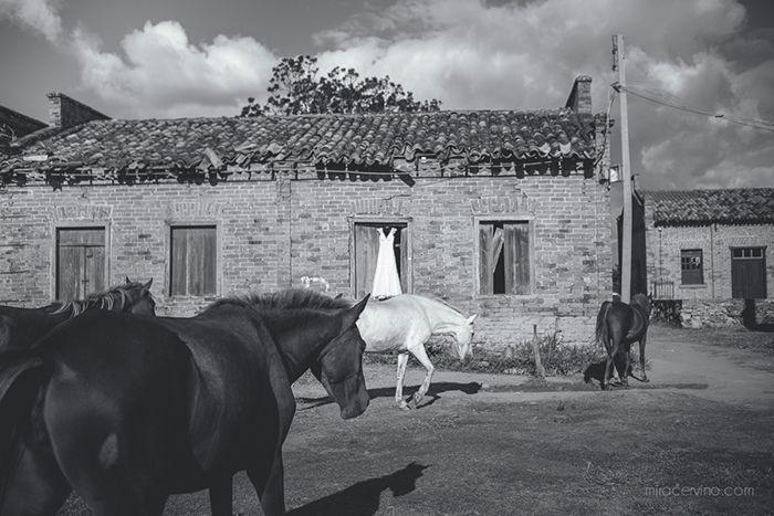Foto por Mira Cervino