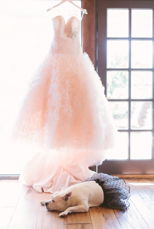Katie-Shuler-Photography Animais no seu casamento!