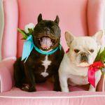 Animais no seu casamento!
