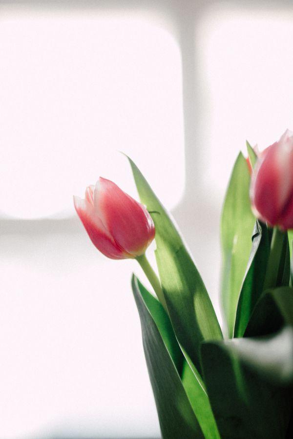 Simply-Lace-Photography Tulipas - Flores para decorar o seu casamento.