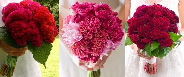 10-flores-exoticas-e-lindas_crista-de-galo_1 10 flores exóticas e lindas na decoração do casamento