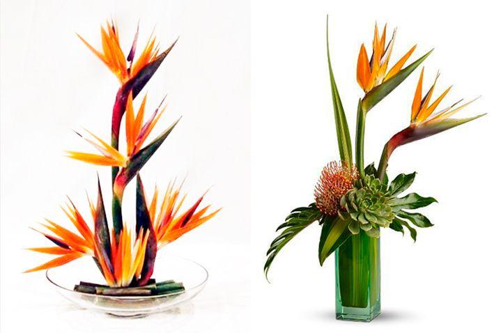 10-flores-exoticas-e-lindas_passaro-do-paraiso_2 10 flores exóticas e lindas na decoração do casamento