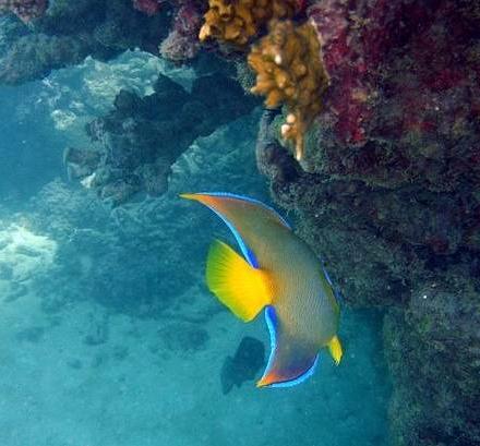 mergulho Maragogi o Caribe Brasileiro | Lua de Mel