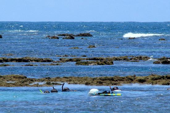 praia-ponta-do-mangue Maragogi o Caribe Brasileiro | Lua de Mel