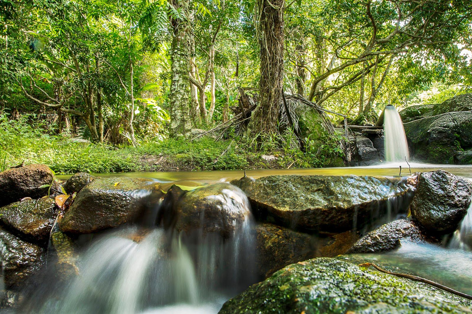 trilha-do-visgueiro Maragogi o Caribe Brasileiro | Lua de Mel