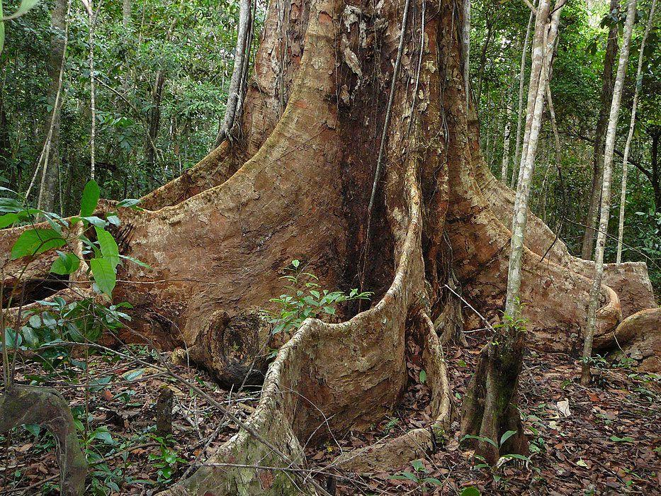 visgueiro Maragogi o Caribe Brasileiro | Lua de Mel