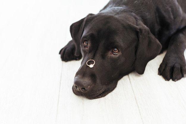 pedidos-de-casamentos-inspiradores-pets-cachorro Pedido de casamento - Inspirações lindas!