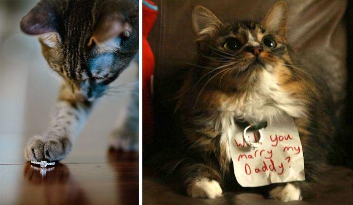 pedidos-de-casamentos-inspiradores-pets Pedido de casamento - Inspirações lindas!